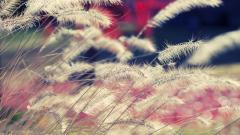 Wind Wallpapers 29098