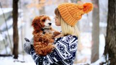 Winter Dog Mood Wallpaper 43357
