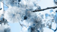 Winter Flower 25796