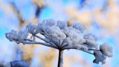 Winter Flower 25801