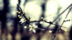 Winter Flower 25807