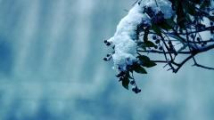 Winter Flower 25810