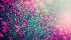 Winter Flowers 25799