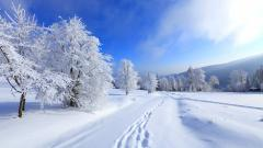 Winter HD Wallpaper 17501