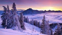Winter HD Wallpaper 17502