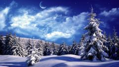 Winter Wallpaper 17516