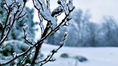 Winter Wallpaper 17518