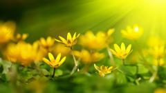 Yellow 27750