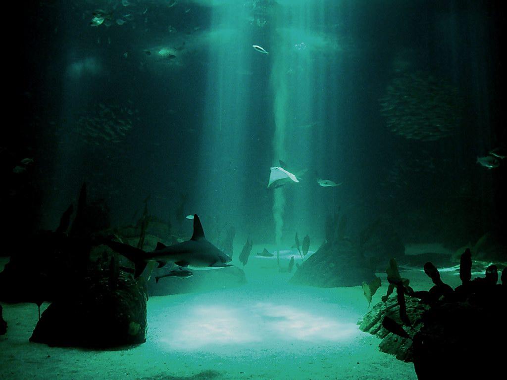 underwater wallpaper 7122