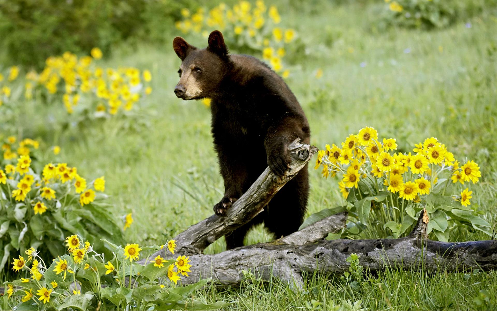 wildlife 30796