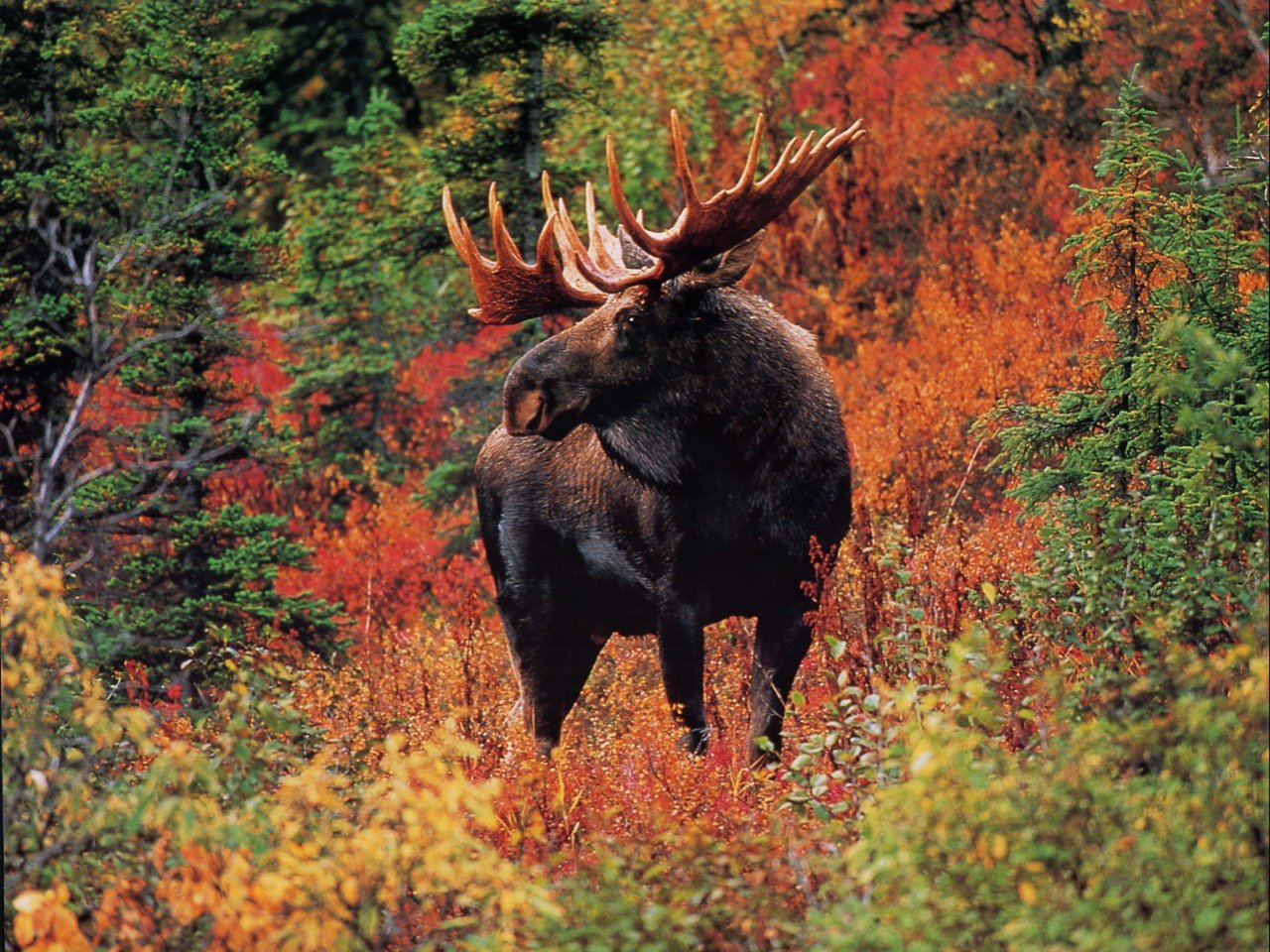 wildlife pictures 30792