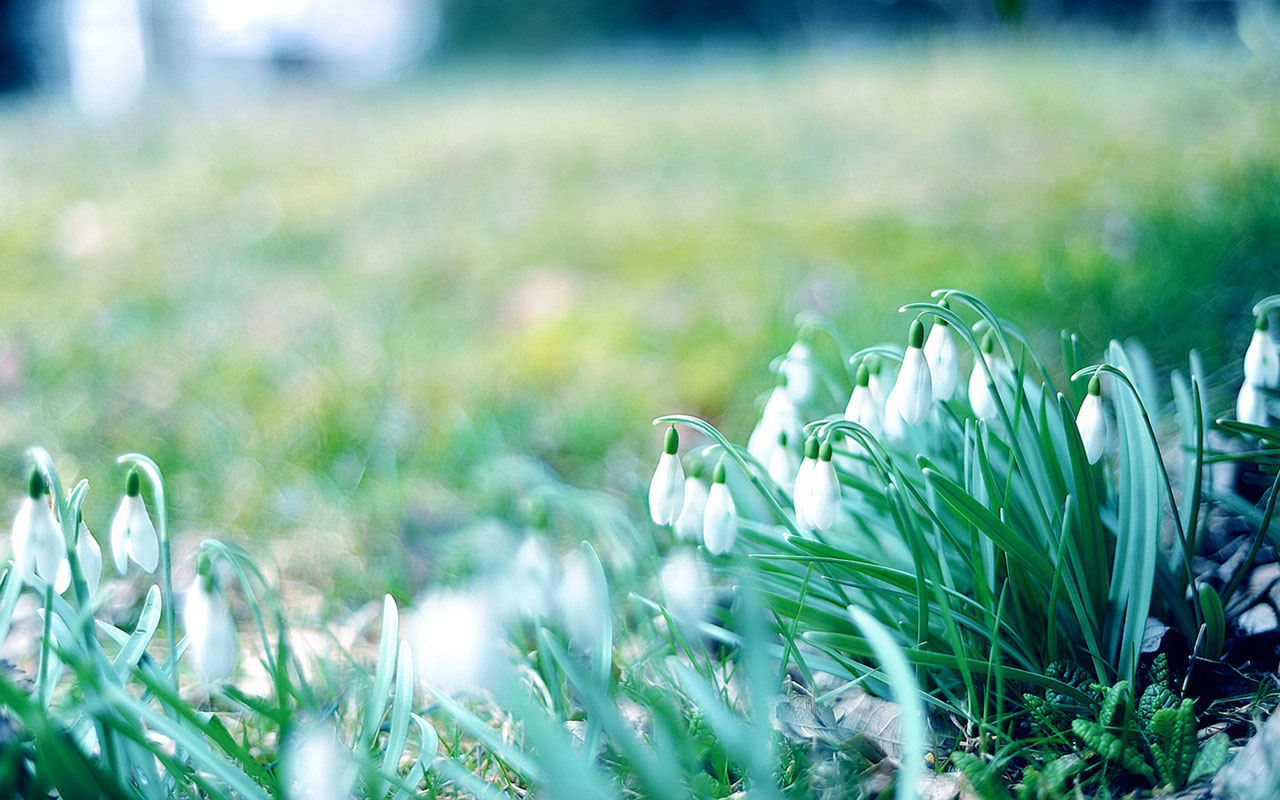 winter flowers 25806