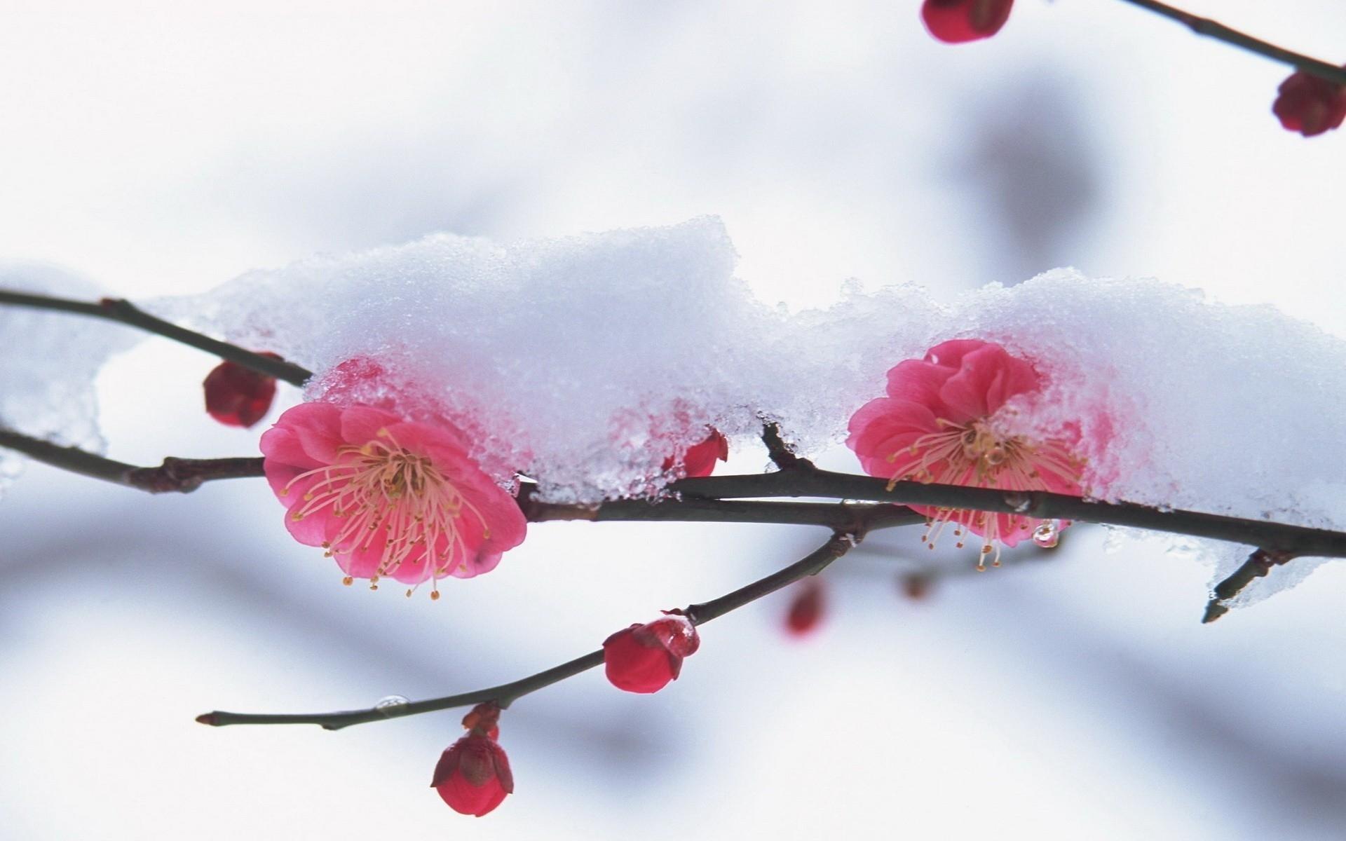 Обои япония весна для рабочего стола