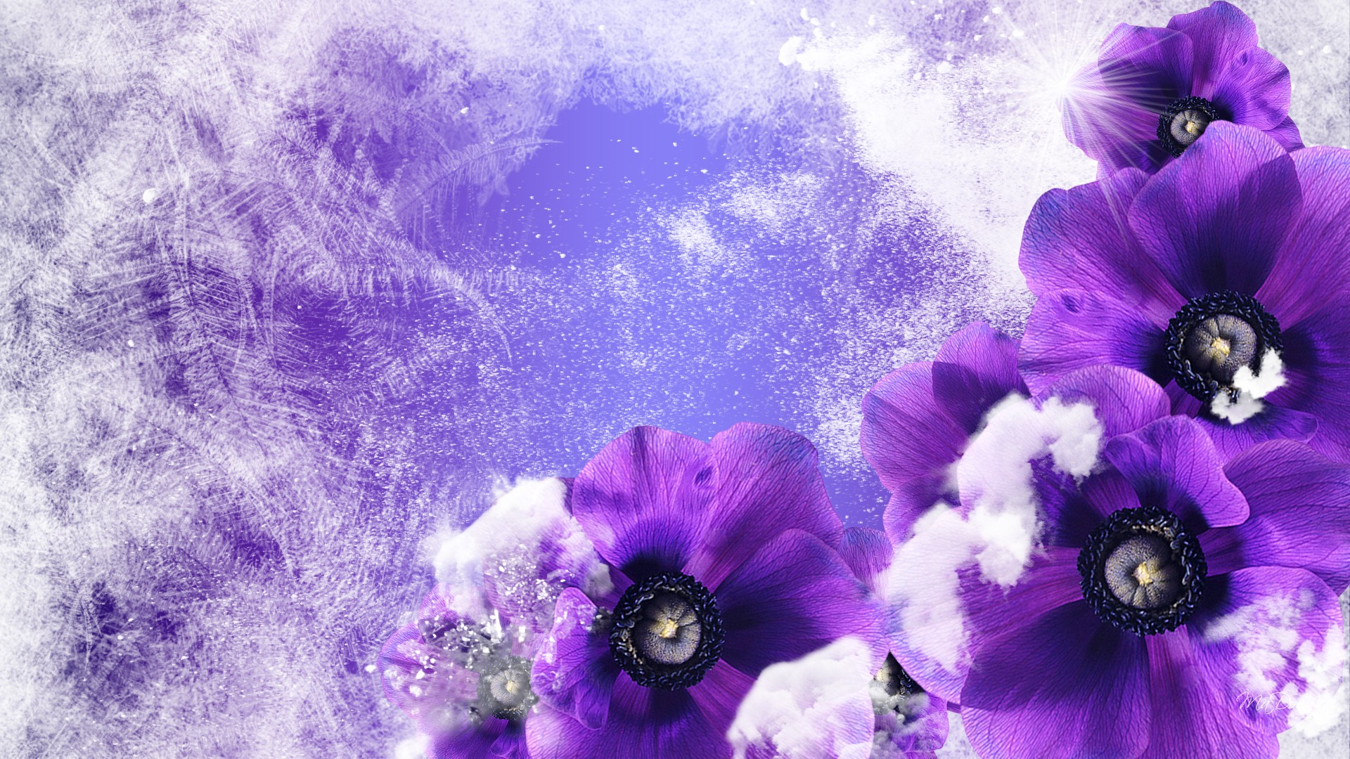 Winter Flowers px HDWallSource