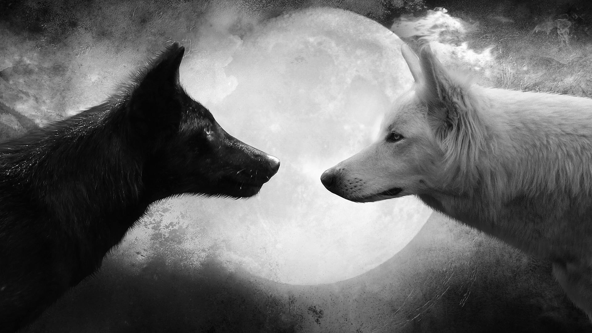wolf wallpaper 16318