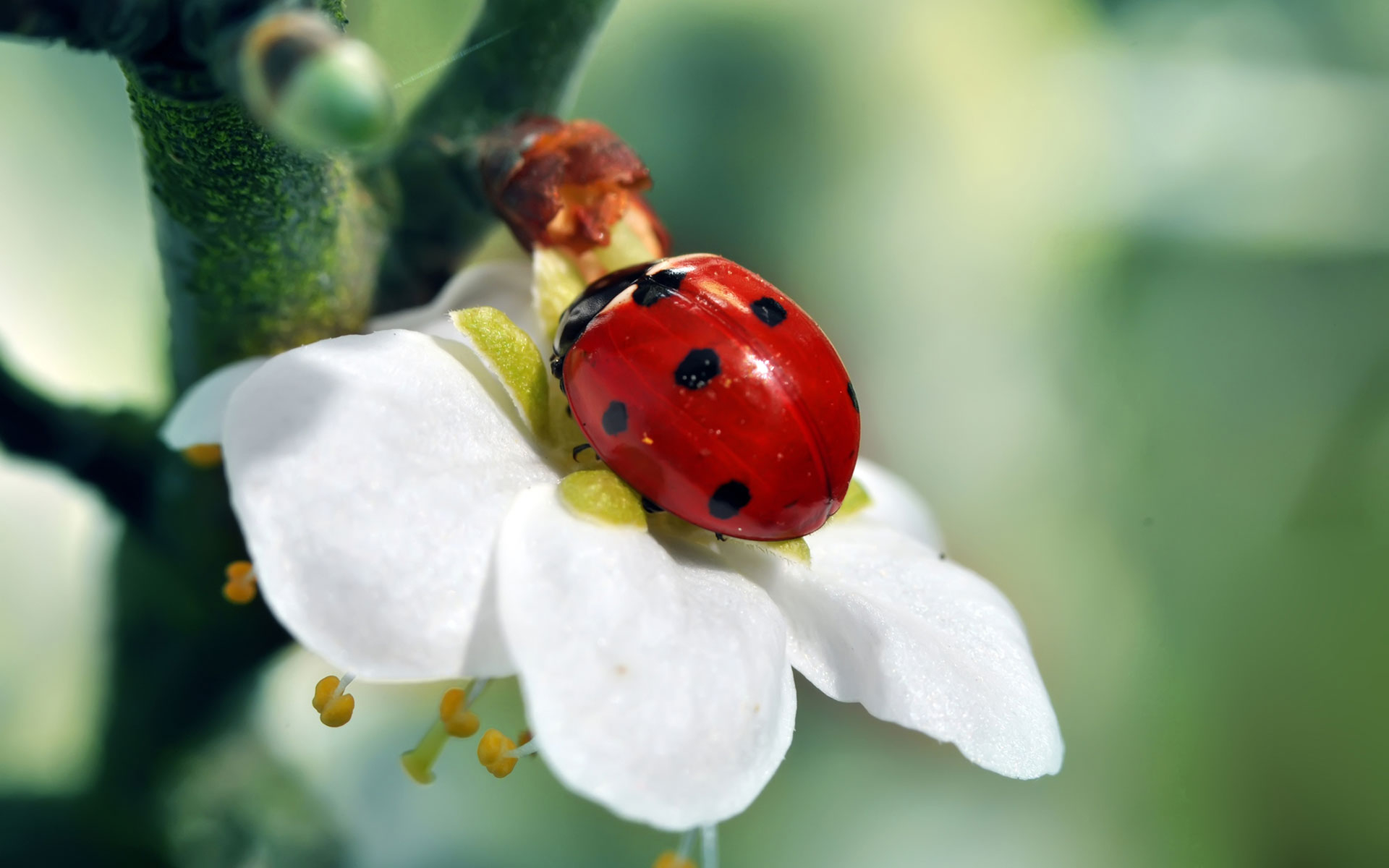 wonderful ladybird wallpaper 44226