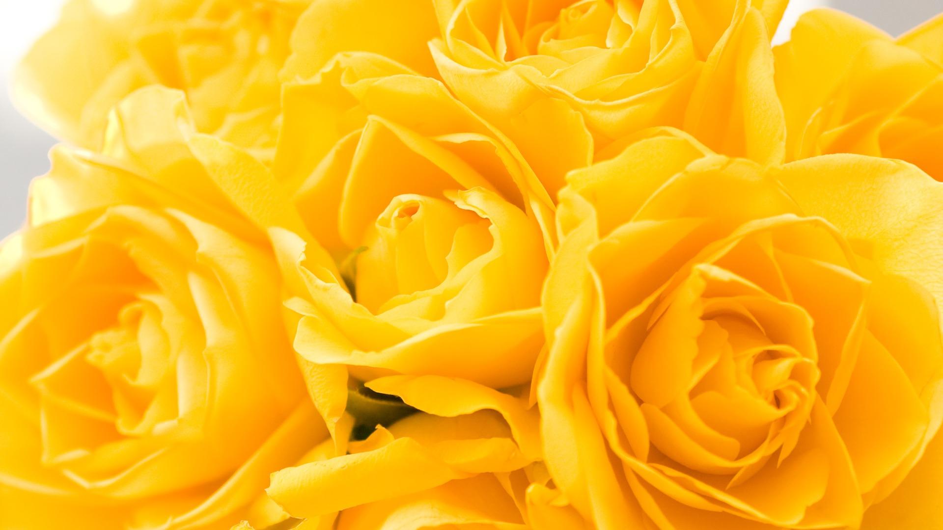 yellow 27752