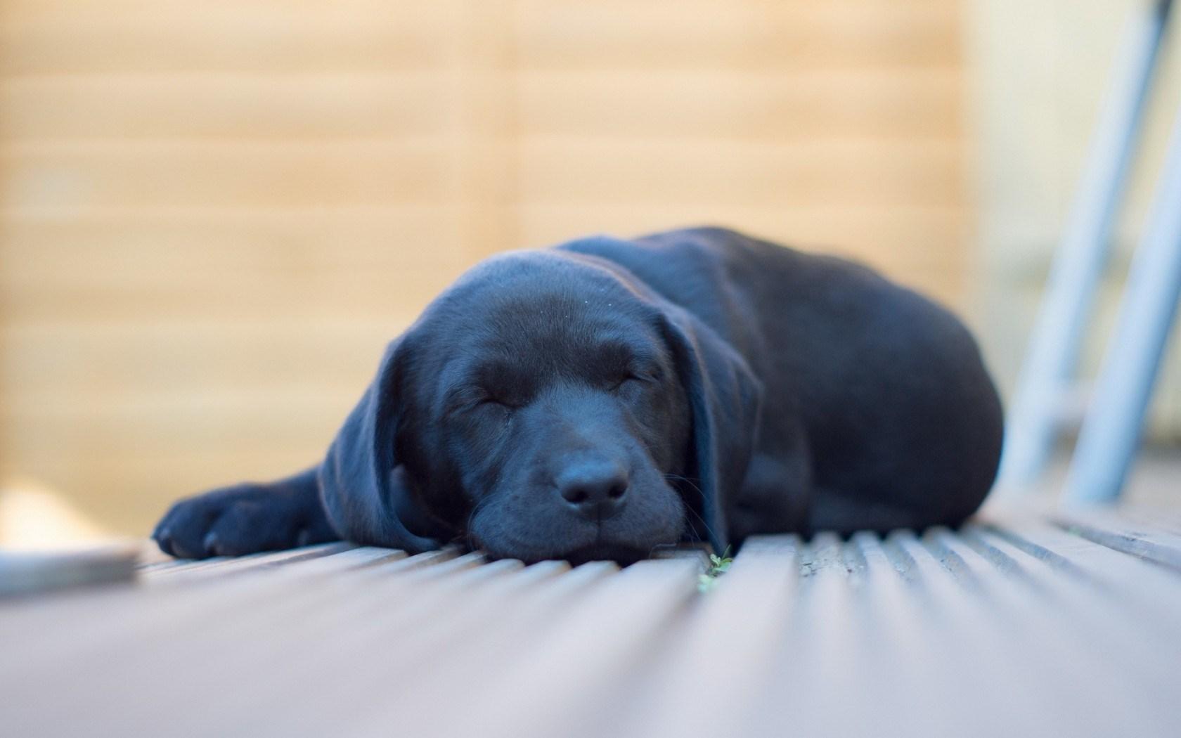 adorable dog rest wallpaper 43872
