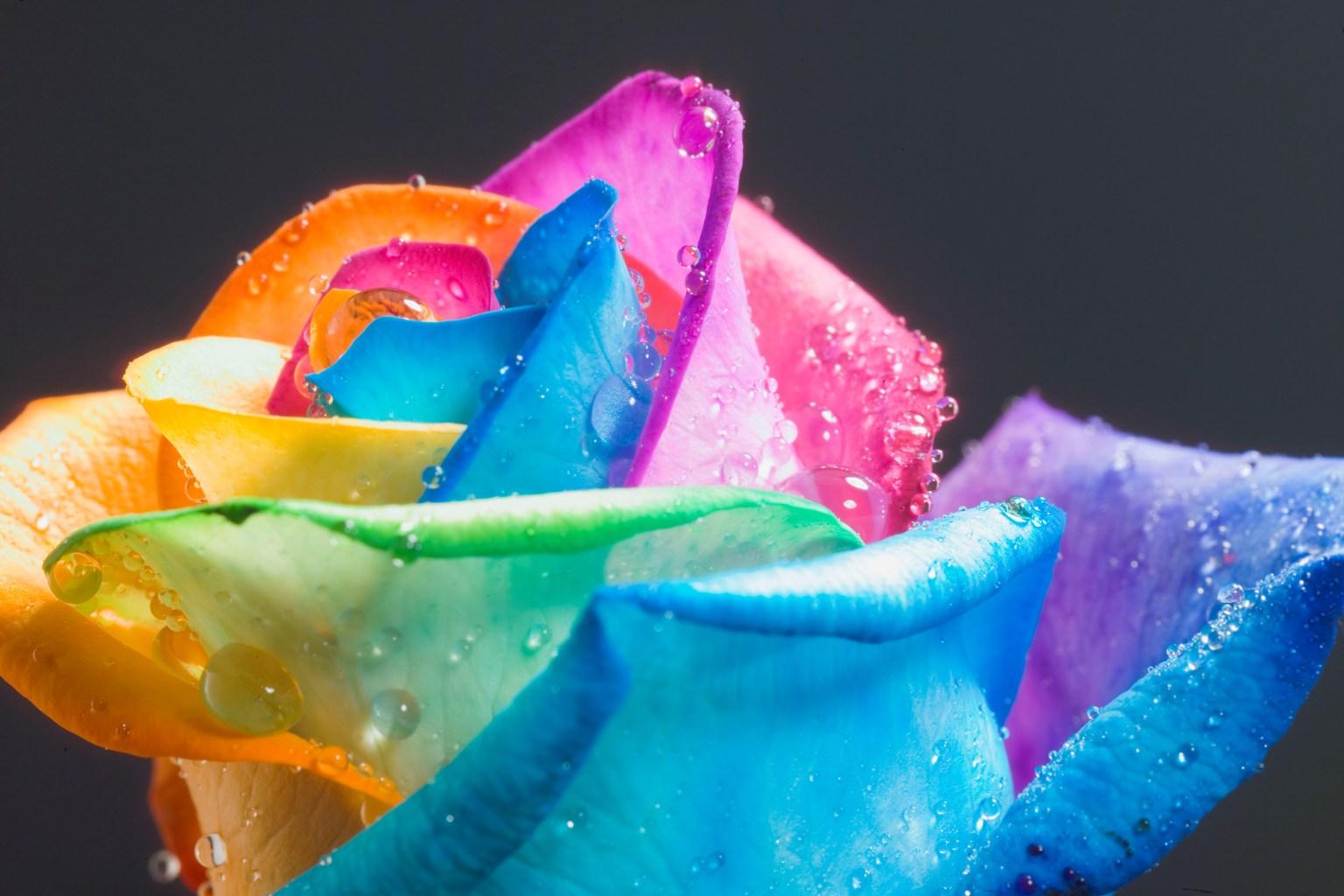 amazing rainbow flowers 17369