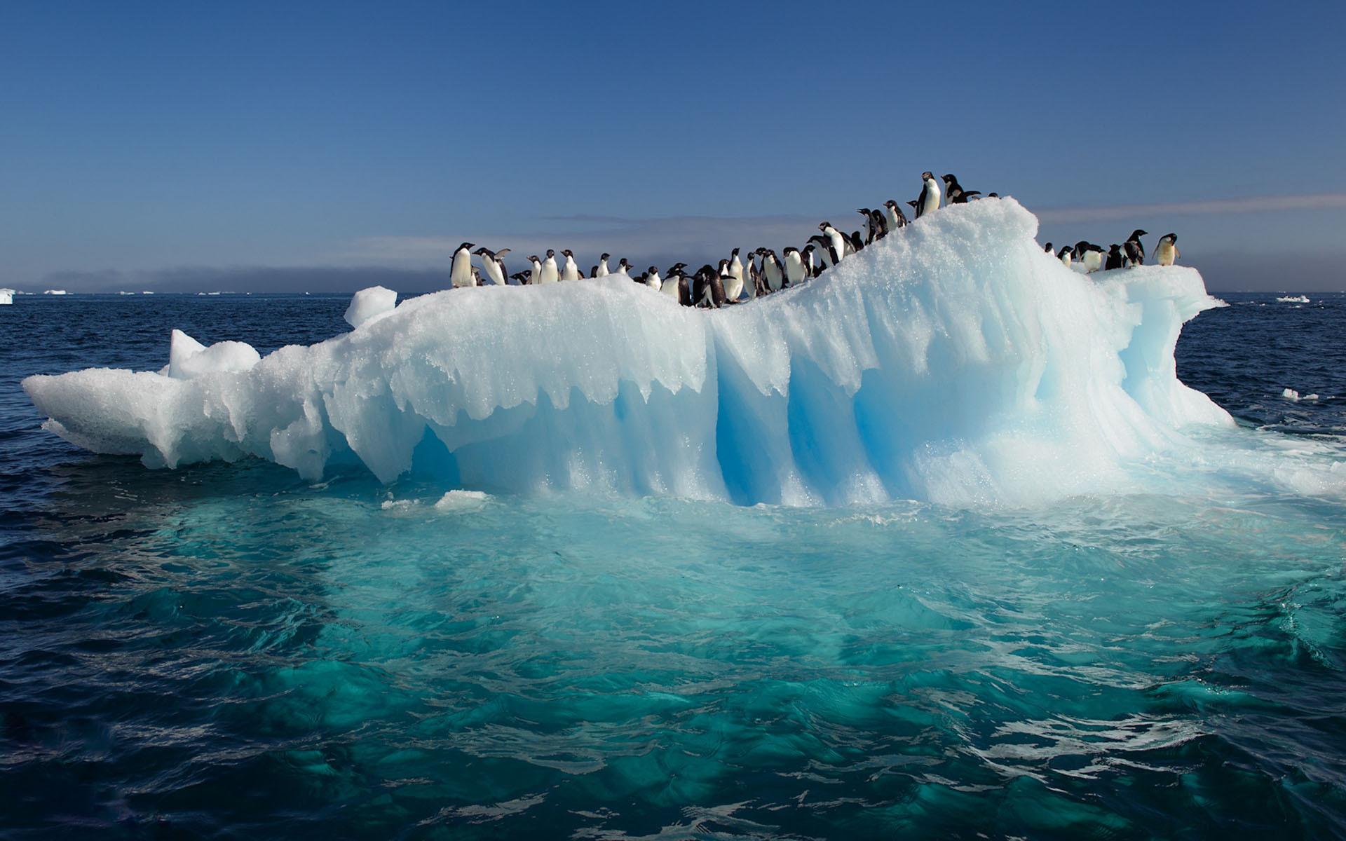 пингвины на глыбе льда  № 91208 загрузить