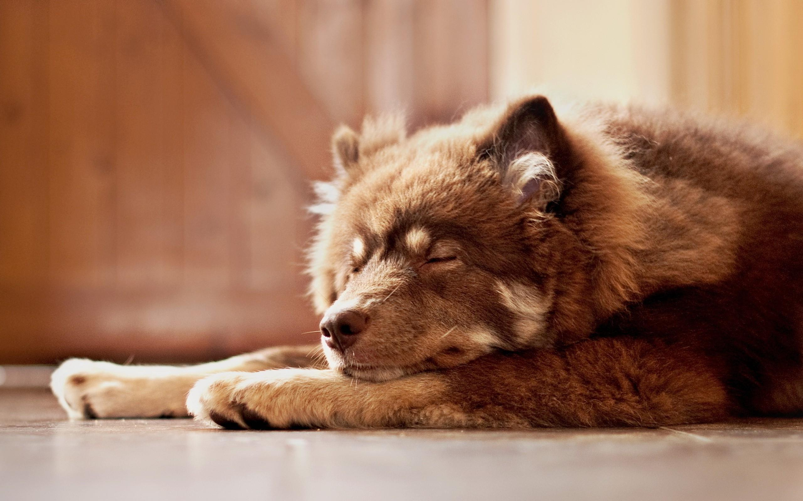 beautiful dog rest wallpaper 43874