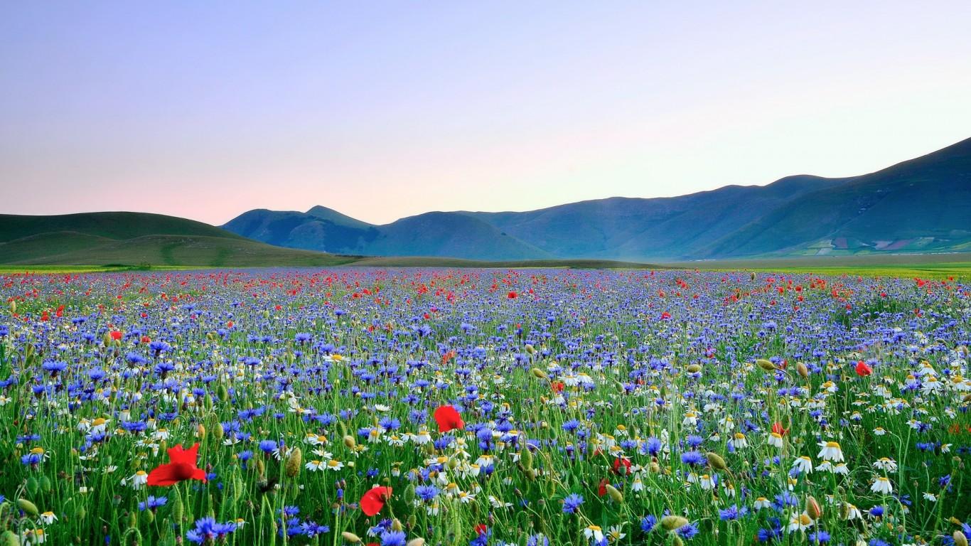 beautiful flower meadow 20388