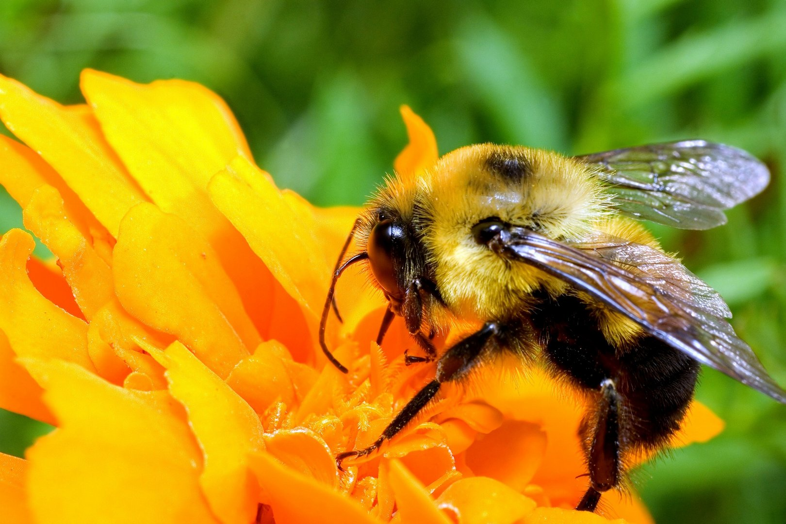 bee pictures 20995