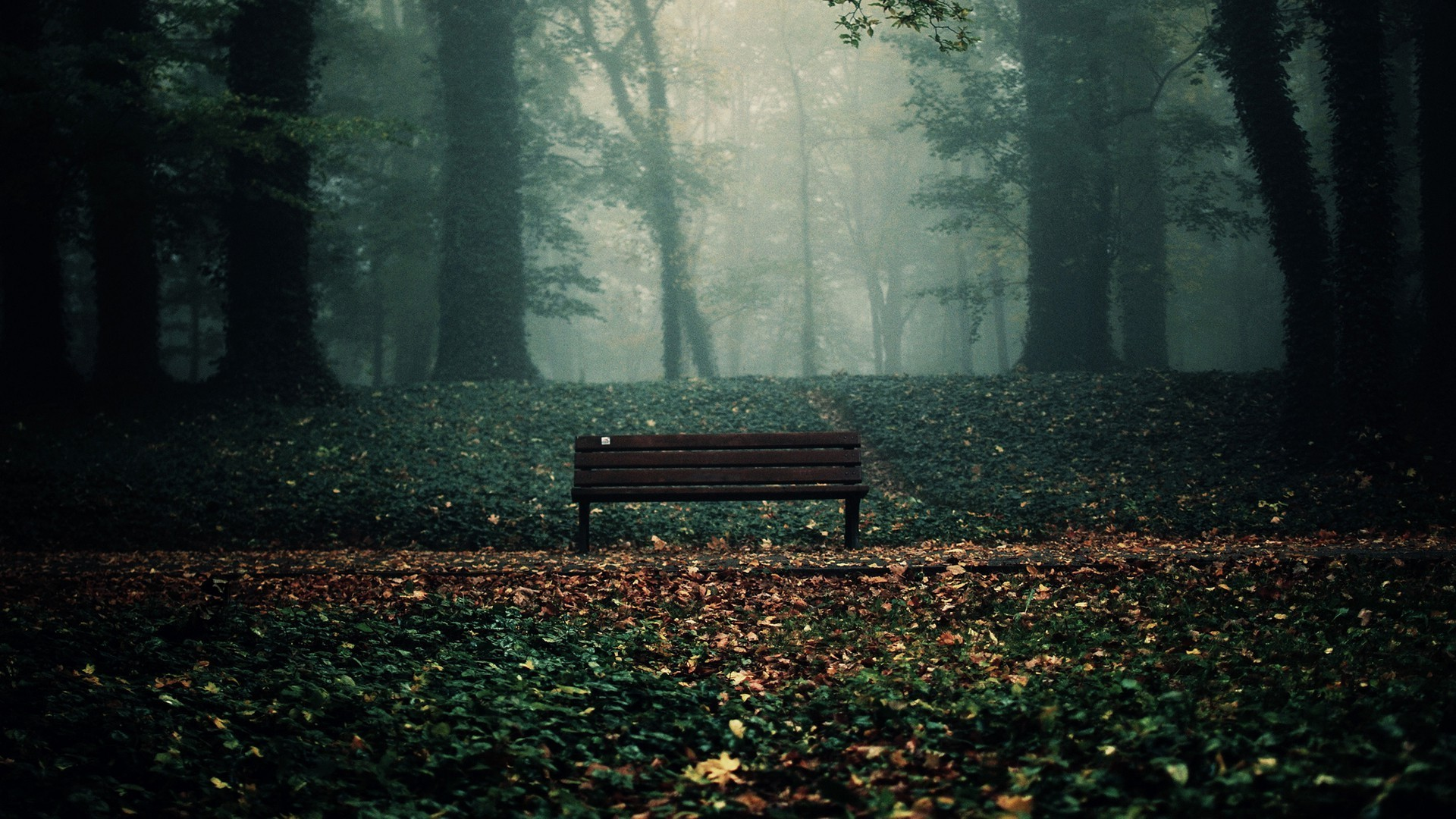 bench in woods wallpaper 20365