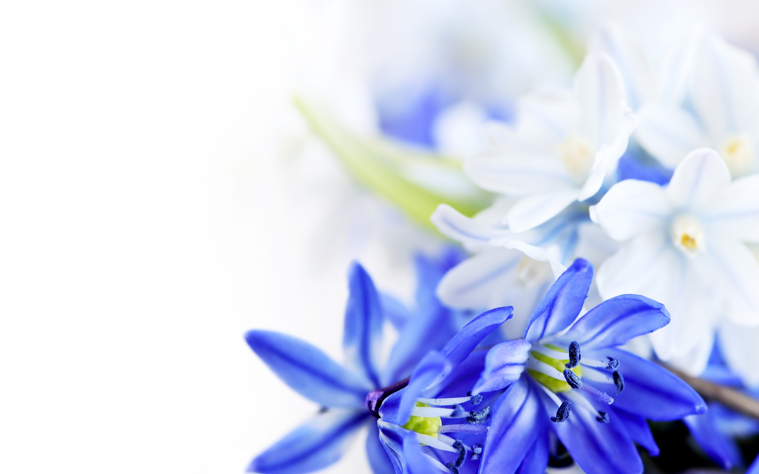 blue and white wallpaper 8904