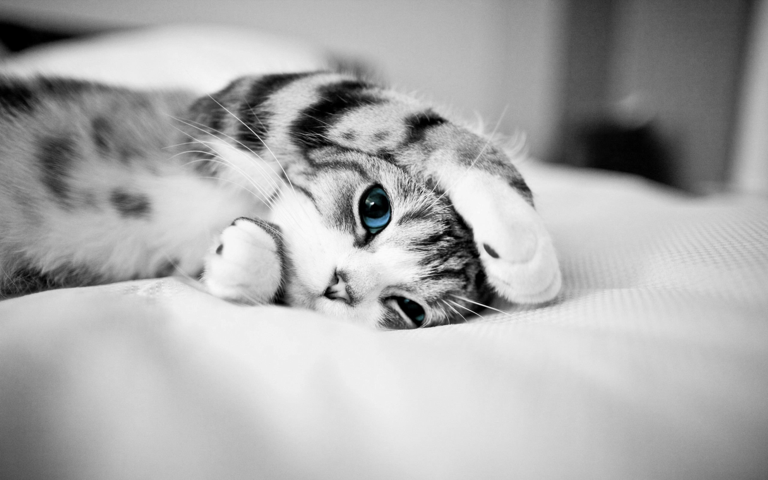 blue eyes picture 28564