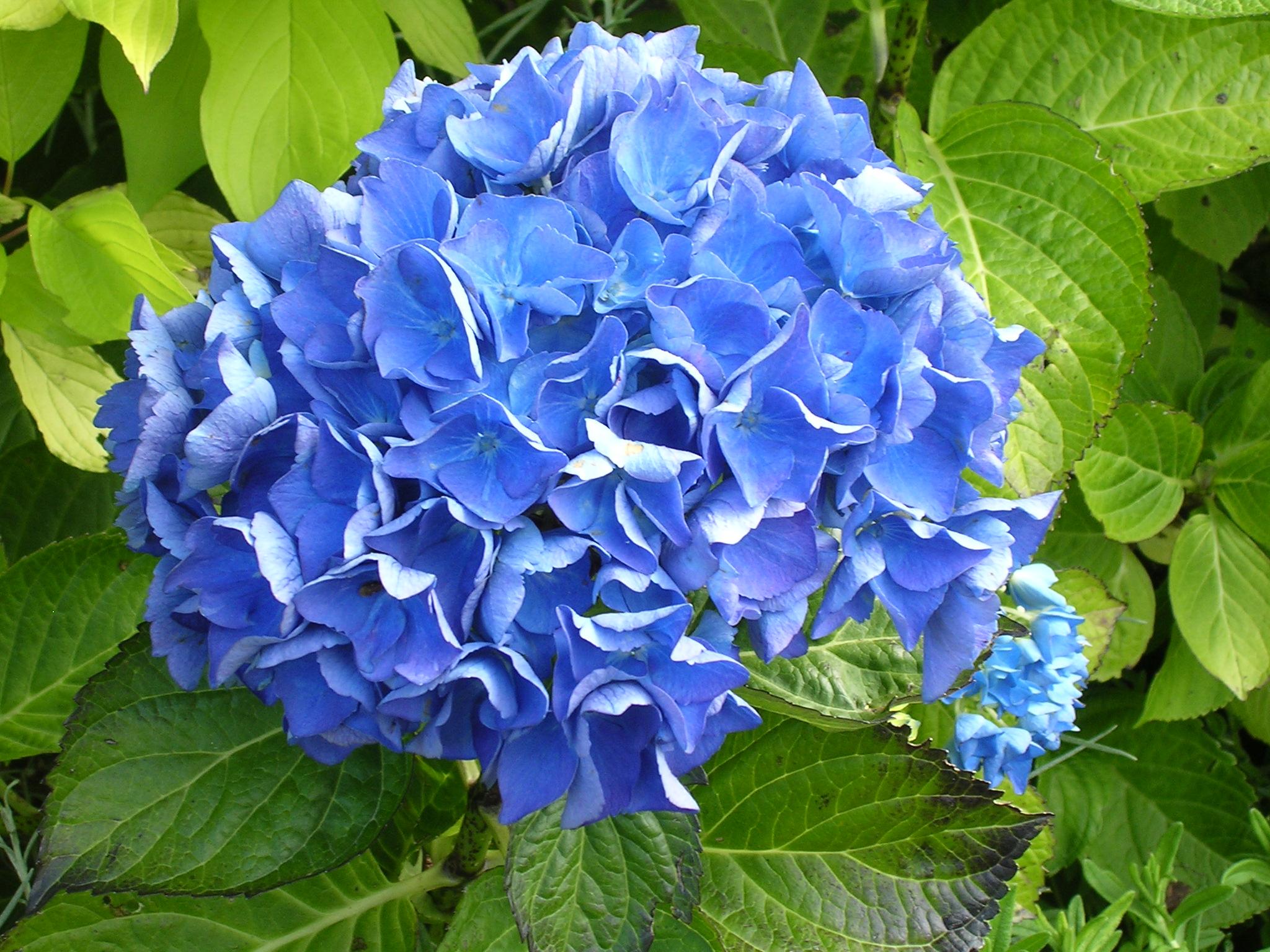 Blue Flower 14092 2048x1536 Px