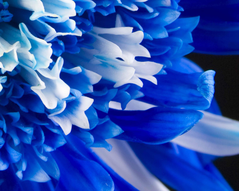 Blue Flower 14103 3000x2400 Px HDWallSource