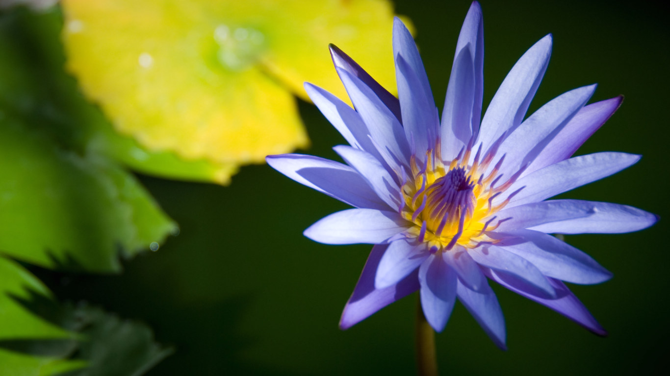 blue flowers 14102