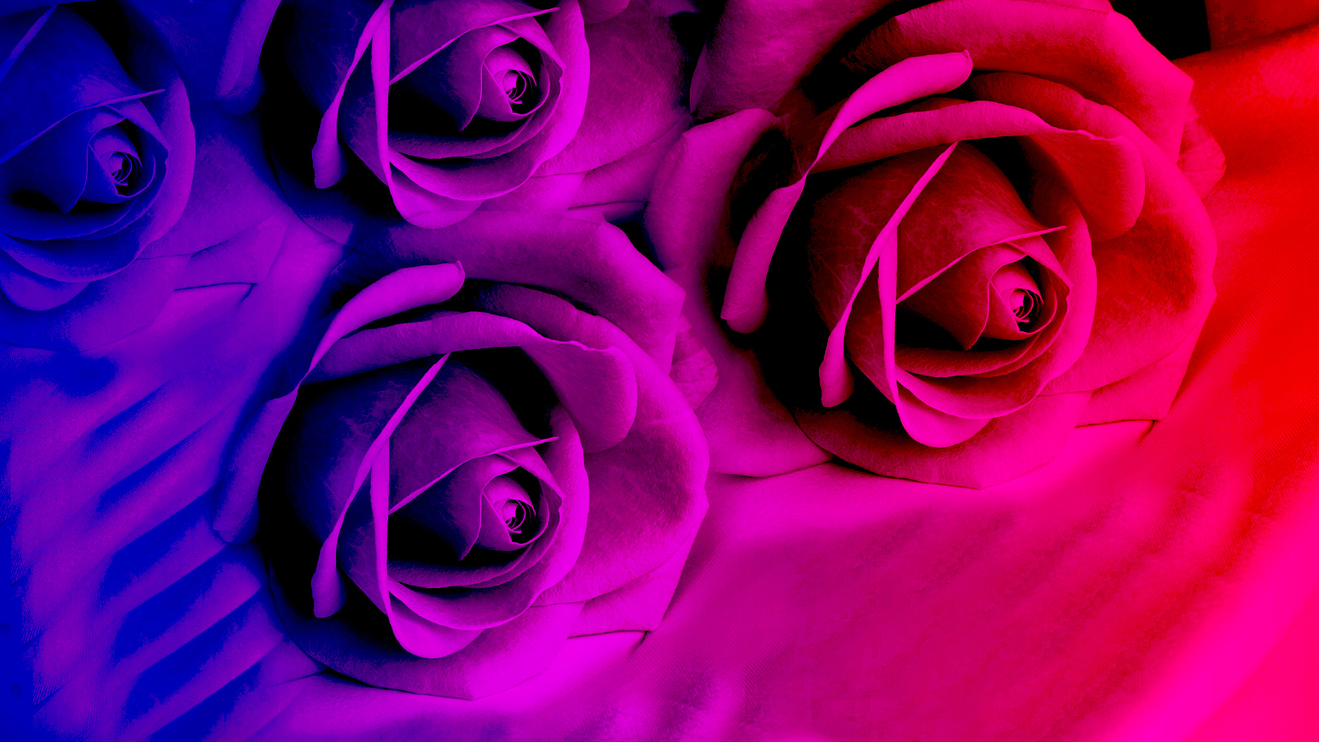Bright Colored Flowers 27746 1920x1080 px ~ HDWallSource.com