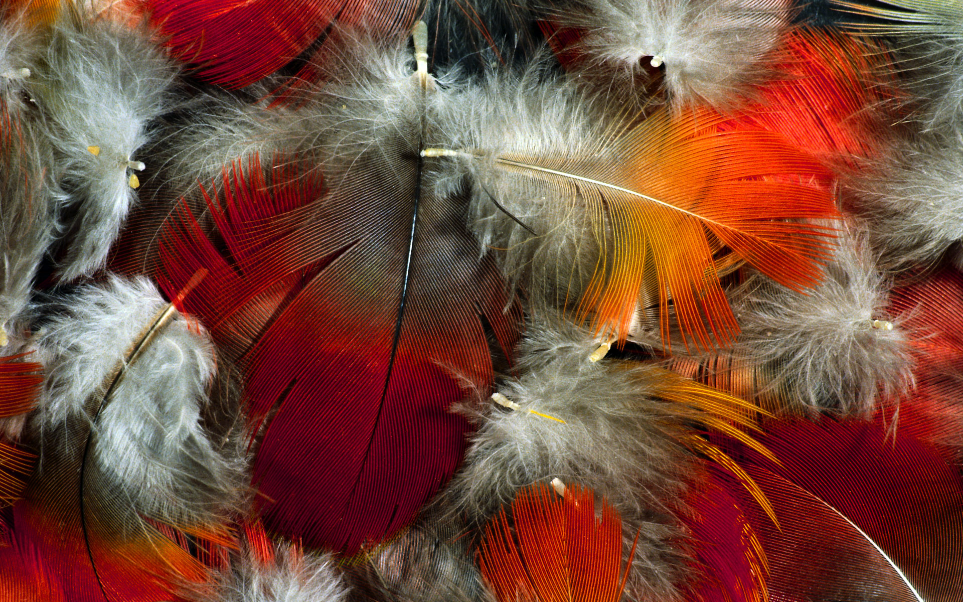 colorful feather wallpaper 35469