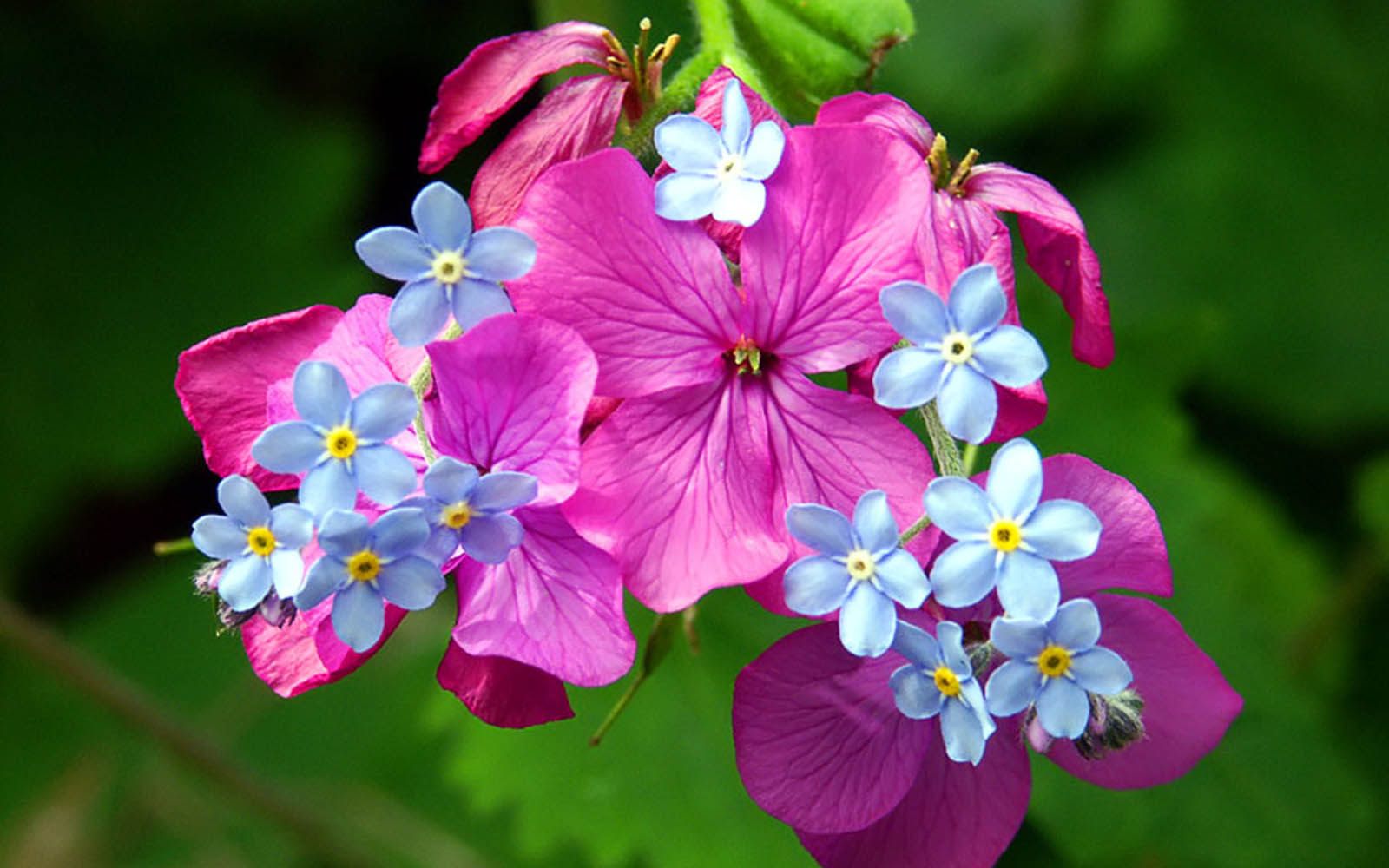 Spring flowers images and names images flower decoration ideas spring flowers pictures with names comousar spring flowers pictures with names colorful spring flowers 14123 mightylinksfo mightylinksfo