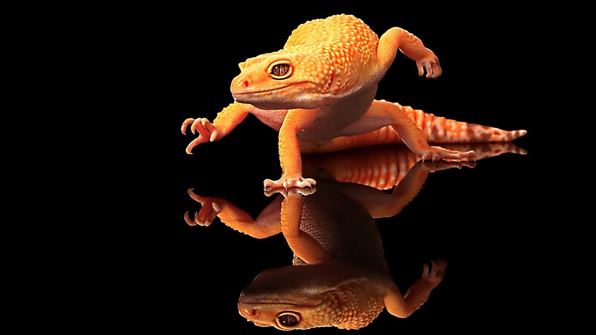 cool lizard wallpaper 21413
