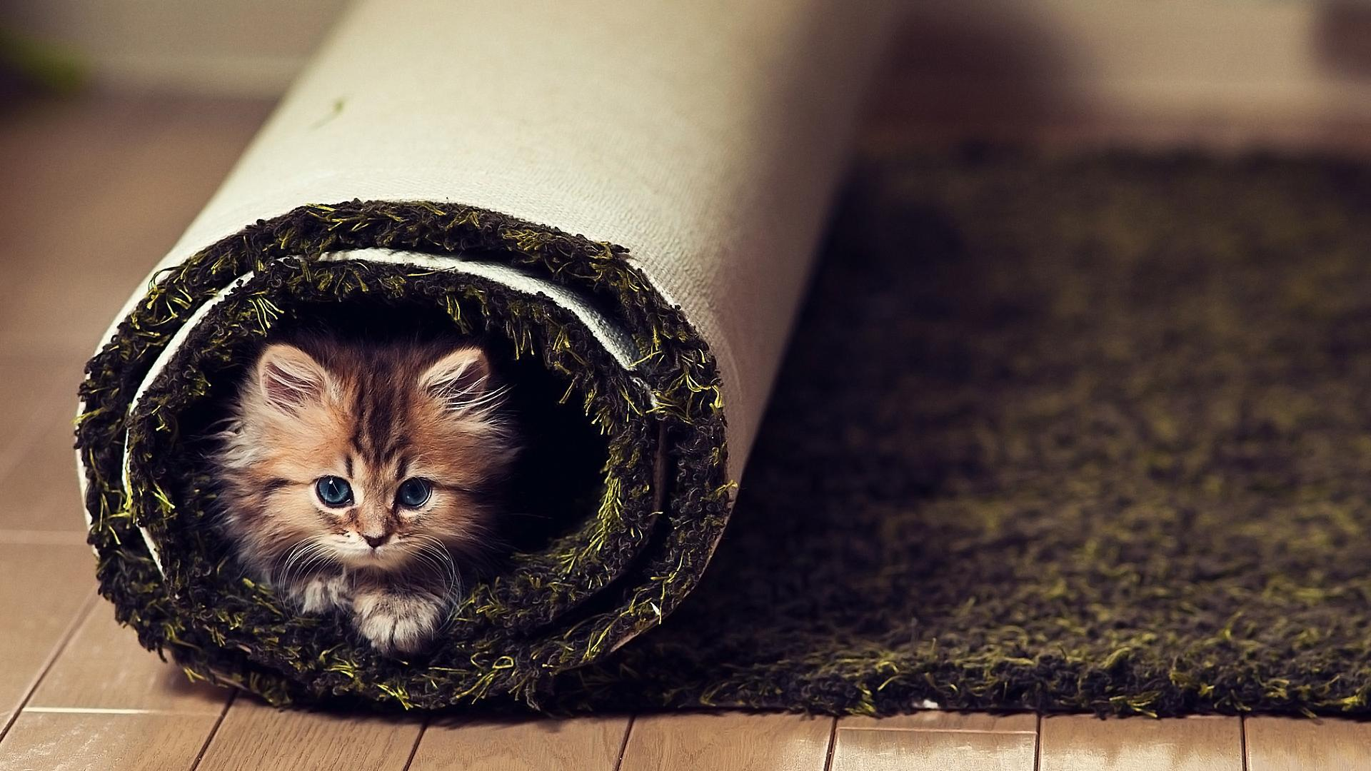 Cute Animals Wallpaper Hd 41722 1920x1080px