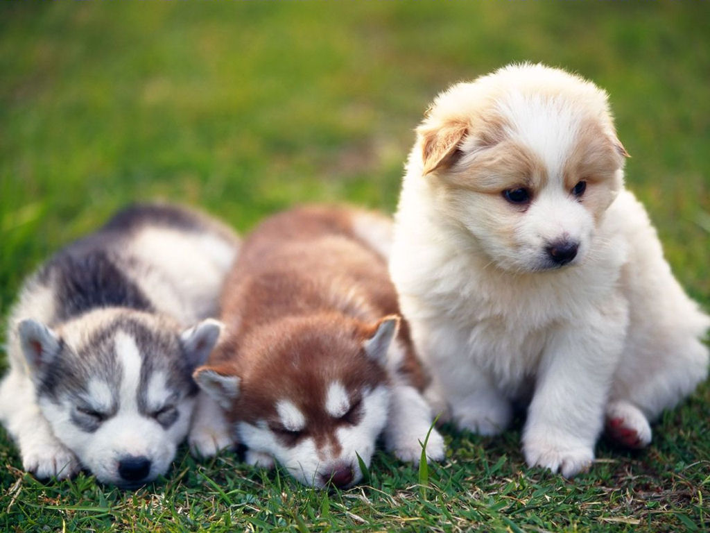 cute puppy pictures 25749