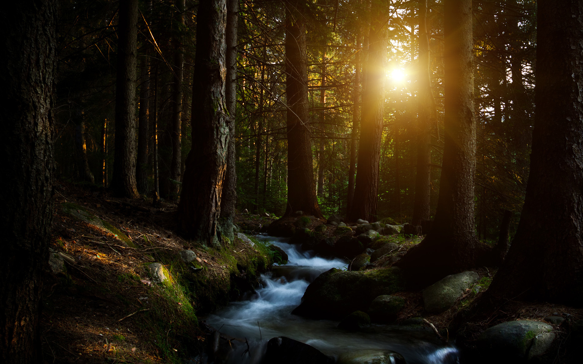 dark forest 35742