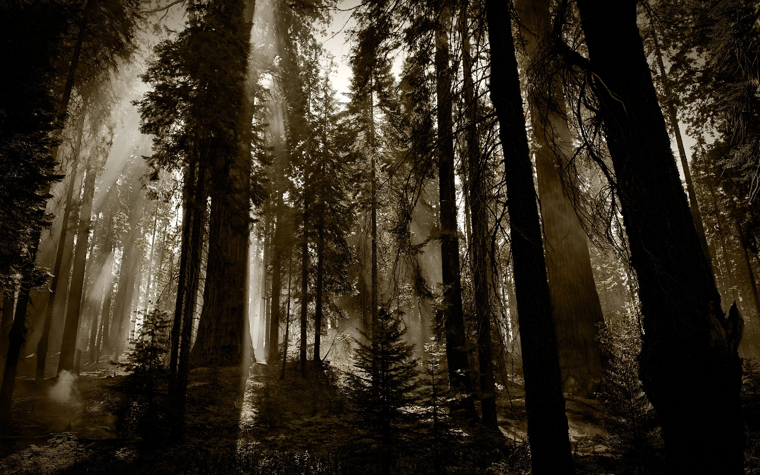 Dark Woods Wallpaper 20376 2560x1600 Px Hdwallsource Com