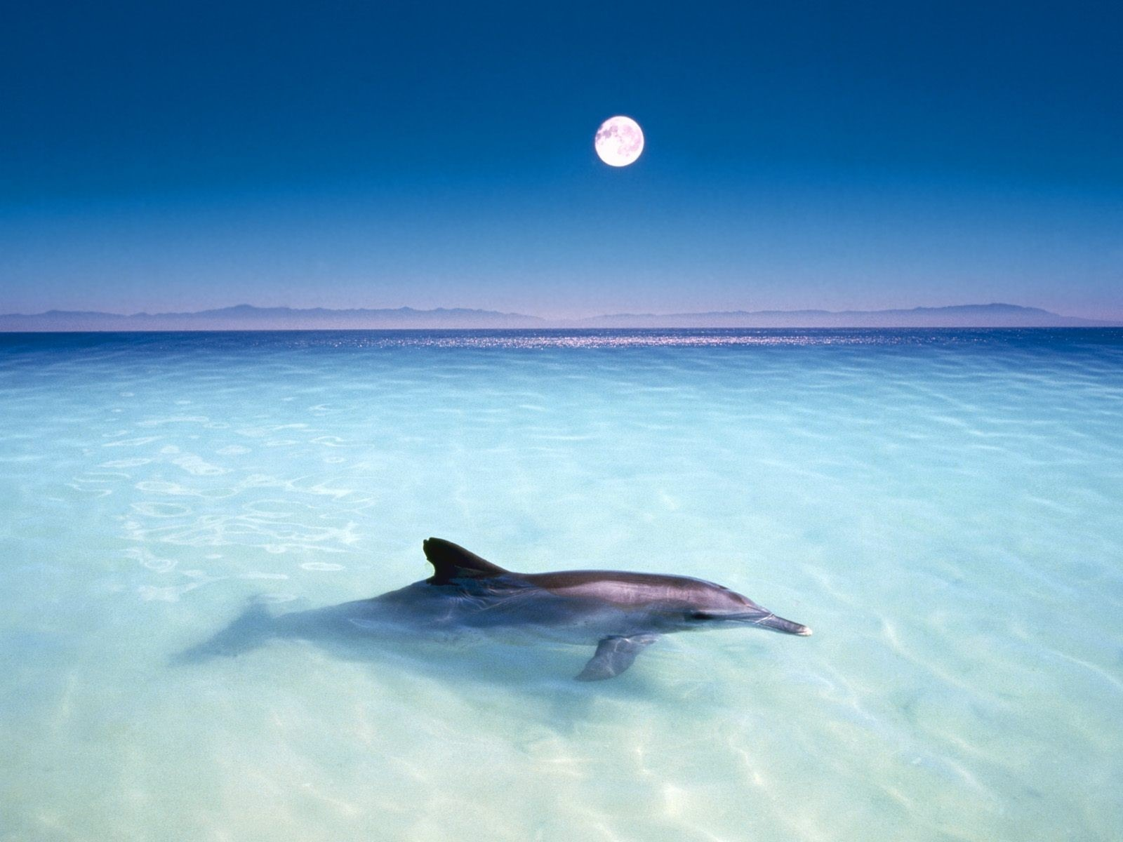 Dolphins Wallpaper 14687 1600x1200 Px HDWallSource