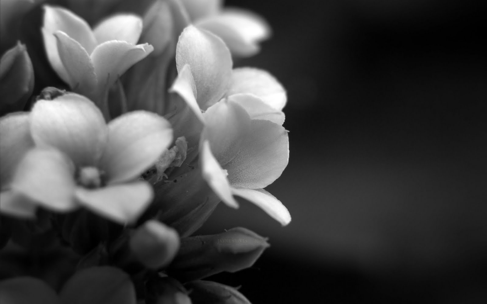elegant flowers 22070