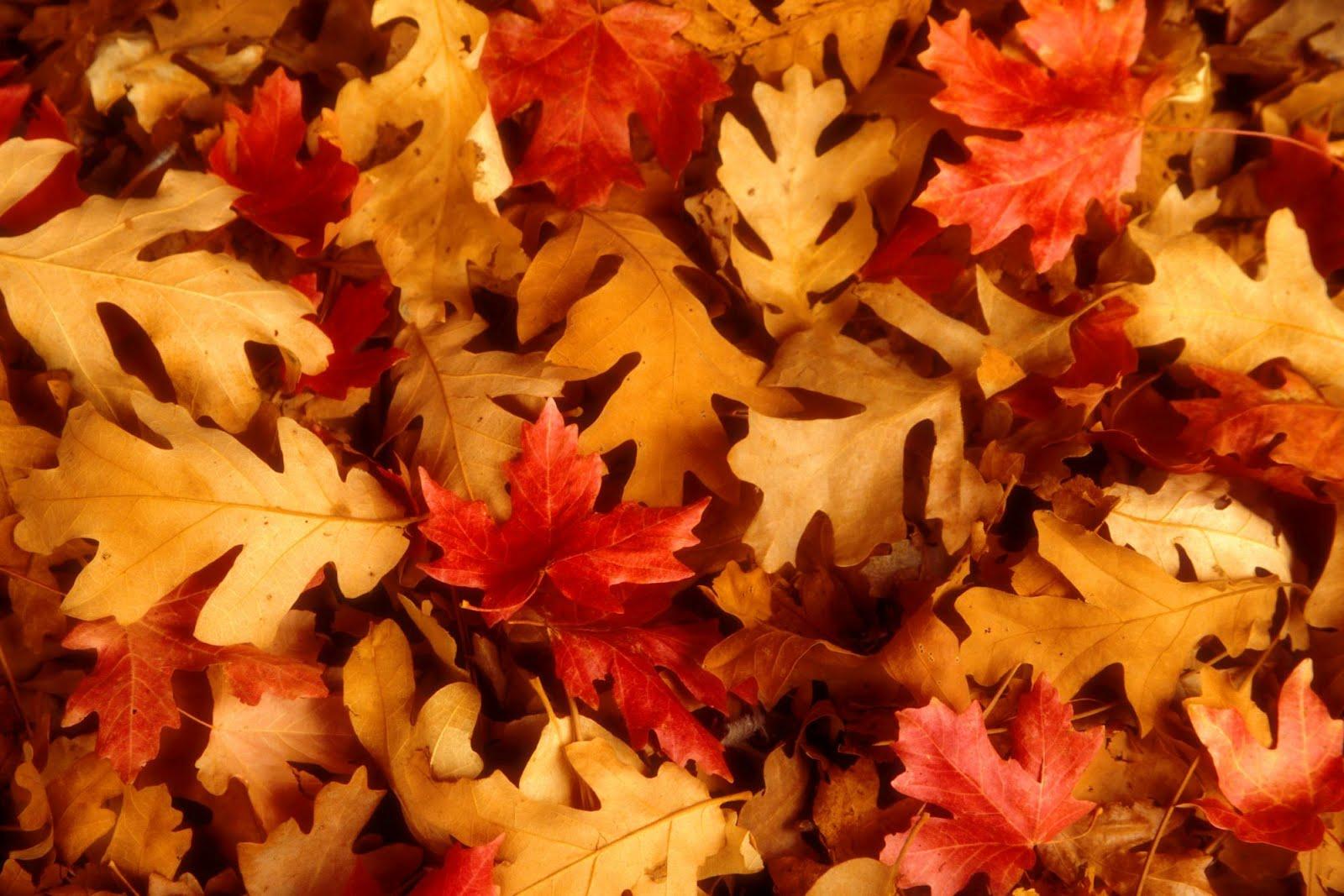 fall scenery 18764