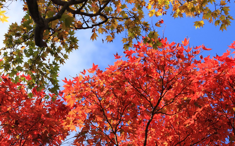 fall scenery 18767