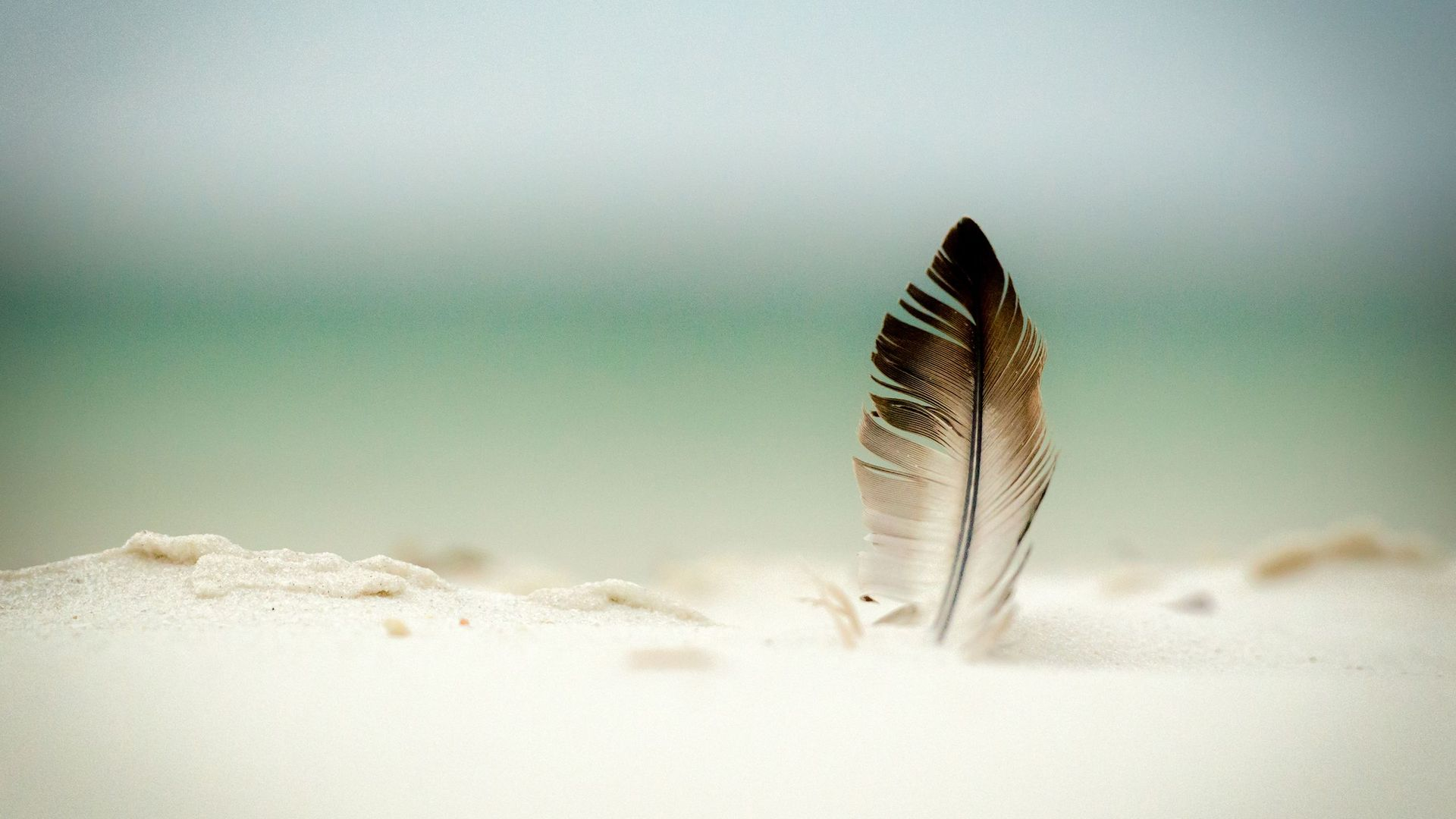 feather 35473