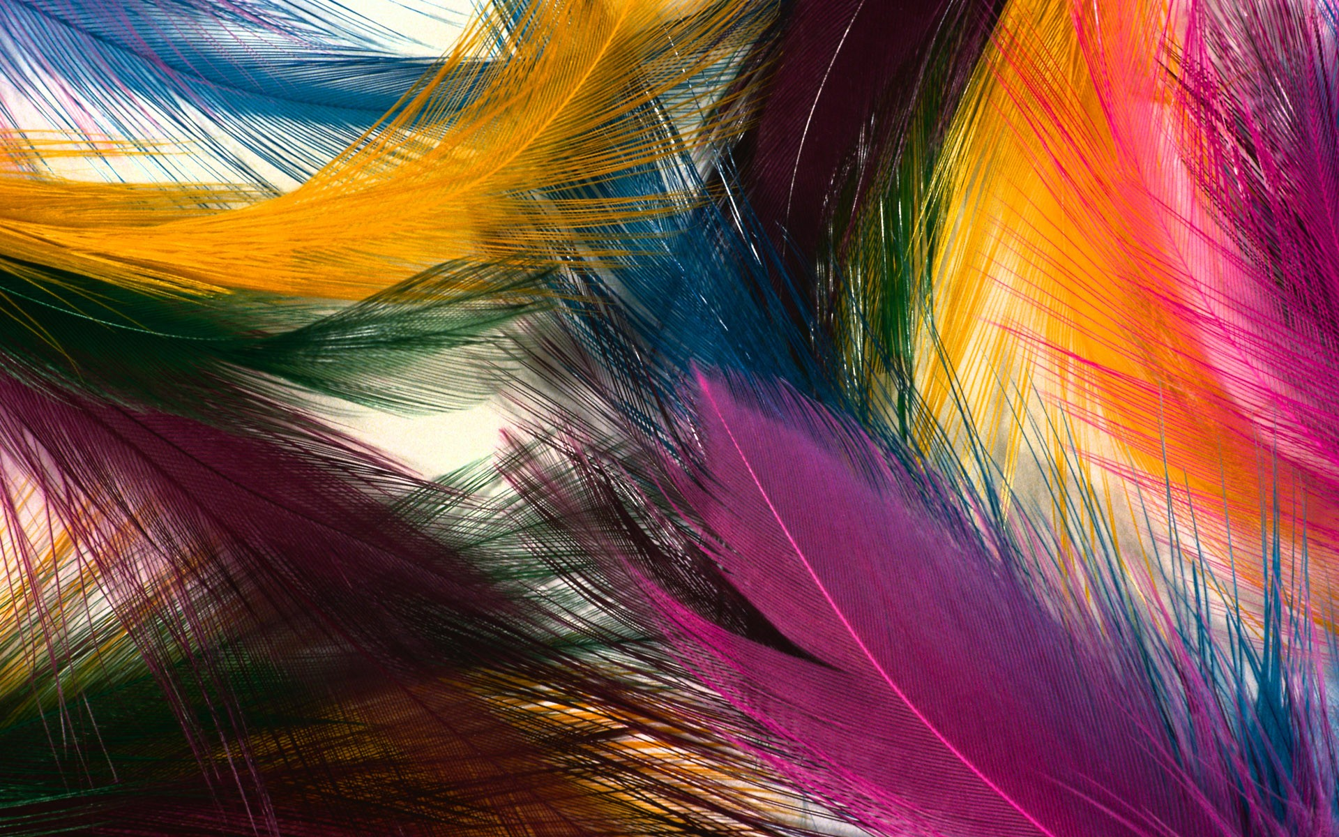feathers 35467