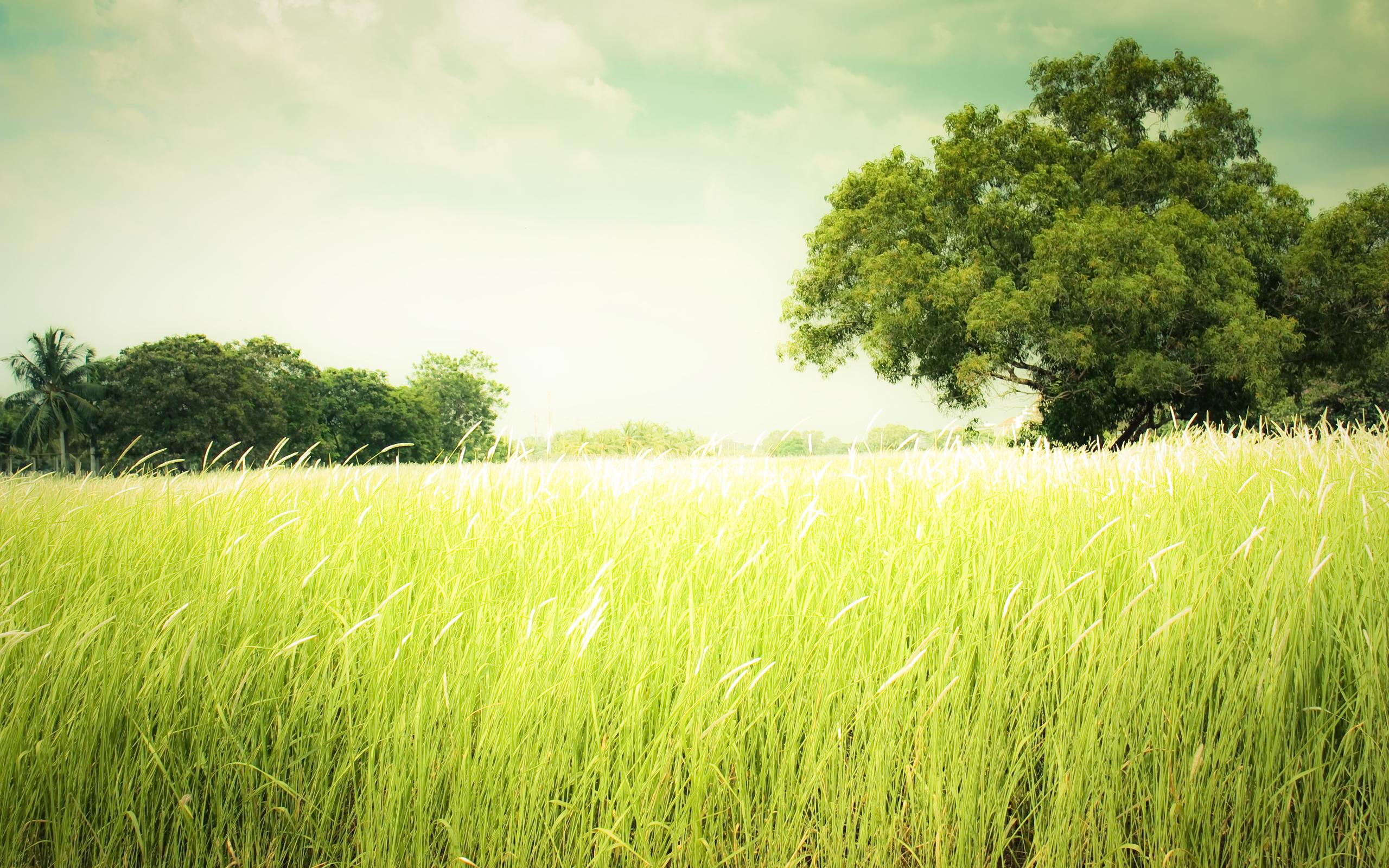 field 2560x1600 2616 - photo #12