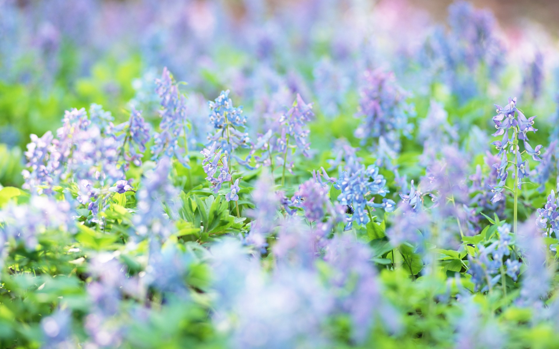 flower meadow wallpaper 20390