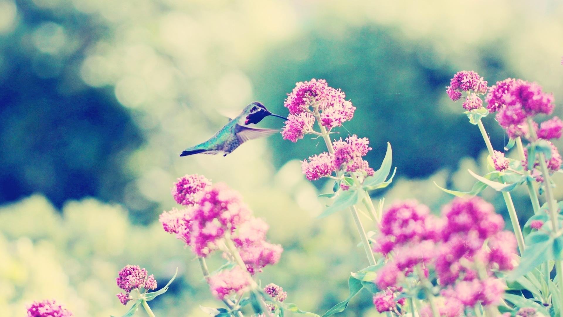 free hummingbird wallpaper 19953